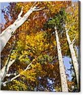 Forest In Autumn Bavaria Acrylic Print