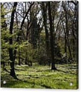 Forest In Spring Acrylic Print