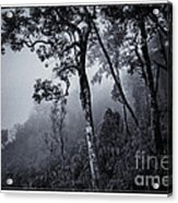 Forest In The Fog Acrylic Print
