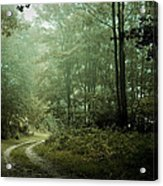 Forest In The Mist Acrylic Print