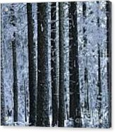 Forest In Winter Acrylic Print by Bernard Jaubert