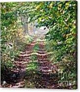 Forest Invitation Acrylic Print