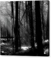 Forest Light In Black And White Acrylic Print
