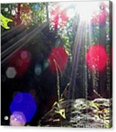 Forest Lightscape Acrylic Print