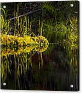 131005b-044 Forest Marsh 1 Acrylic Print