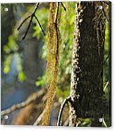 Forest Moss Acrylic Print