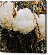 Forest Mushroom Trio Acrylic Print