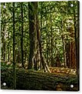Forest Of Cathedral Grove Collection 1 Acrylic Print