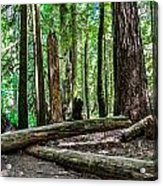 Forest Of Cathedral Grove Collection 2 Acrylic Print