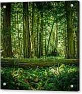 Forest Of Cathedral Grove Collection 7 Acrylic Print