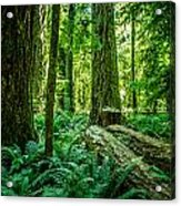 Forest Of Cathedral Grove Collection 8 Acrylic Print