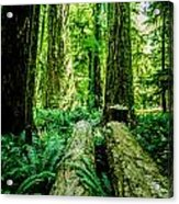 Forest Of Cathedral Grove Collection 9 Acrylic Print