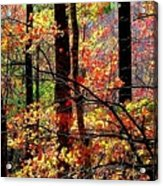 Color The Forest Acrylic Print