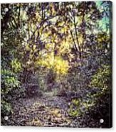 Forest Of Light Acrylic Print