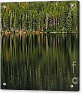 Forest Of Reflection Acrylic Print