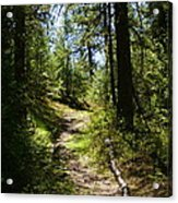 Forest Path In Spokane 2014 Acrylic Print