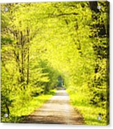 Forest Path In Spring With Bright Green Trees Acrylic Print