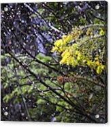 Forest Peace Acrylic Print
