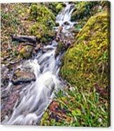 Forest Rapids Acrylic Print