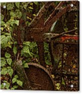 Forest Reclaimed Acrylic Print by Jack Zulli