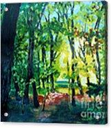 Forest Scene 1 Acrylic Print