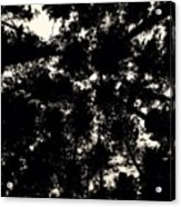 Forest Sky Acrylic Print