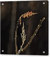 Forest Song Acrylic Print