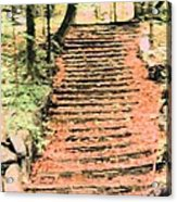 Forest Steps Acrylic Print
