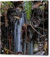 Forest Streamlet Acrylic Print