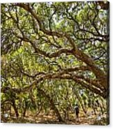Forest Stroll - The Magical And Mysterious Trees Of The Los Osos Oak Reserve. Acrylic Print