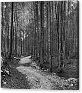 Forest Trail Bw Acrylic Print