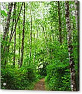 Forest Trail To Follow Acrylic Print