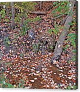 Forest Trickle Acrylic Print
