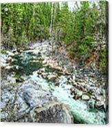 Forest Vein Acrylic Print