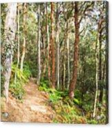 Forest Walk 19 Acrylic Print