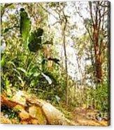 Forest Walk 6 Acrylic Print