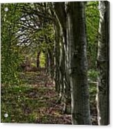 Forest Walk Hdr Acrylic Print