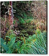 Forest Wetlands II Acrylic Print