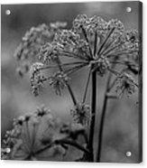 Forest Wild Flowers Acrylic Print