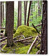 Forest With Moss-covered Rocks Along John's Lake Trail In Glacier Np-mt Acrylic Print