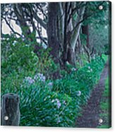 Forested Path Acrylic Print