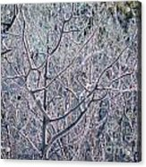 Forests Of Frost Acrylic Print