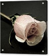 Forever A Rose Acrylic Print