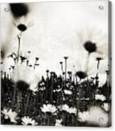 Forever Field  Acrylic Print