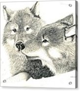 Forever Wolf Love-the Greeting Acrylic Print