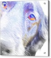 A Dog Will Be Forever Yours  Acrylic Print