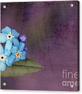 Forget Me Not 02 - S0304bt02b Acrylic Print