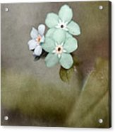 Forget Me Not 03 - S07bt07 Acrylic Print