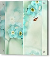 Forget Me Not..... Acrylic Print