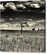 Forgotten Tree Acrylic Print